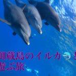 女子旅・御蔵島のイルカと遊ぶ旅